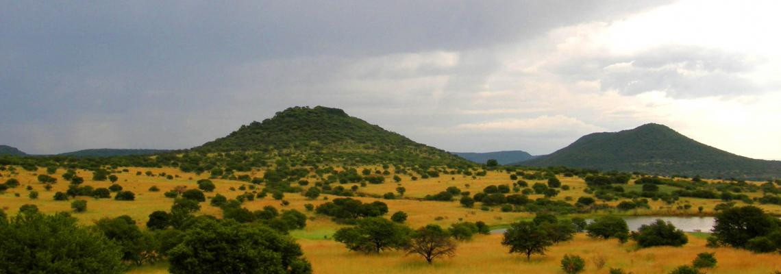 South Africa Savanna